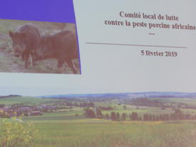 Comité local de lutte contre la peste porcine