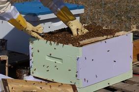 Déclaration de ruches 2018